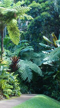 Queensland Wet Tropics